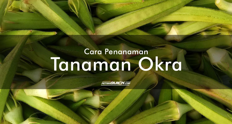[20190411 - Tanaman Okra] - 2