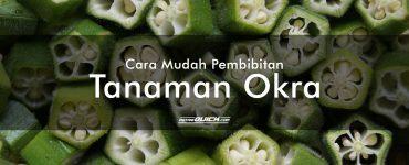 Cara Mudah Pembibitan Tanaman Okra