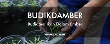 BUDIKDAMBER<br/>Budaya Ikan Dalam Ember